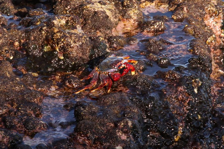 Meeresbewohner auf Vulkangestein