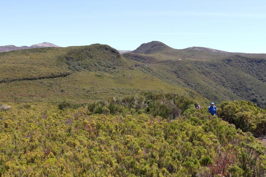 Besenheide- im Hintergrund links Pico Ruivo do Paul