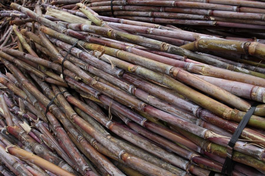 Alte Handelsware Zuckerrohr