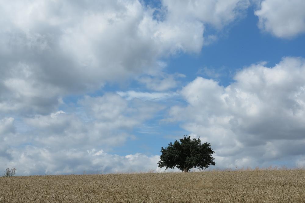 Getreidefeld auf der Hochfläche bei Müden