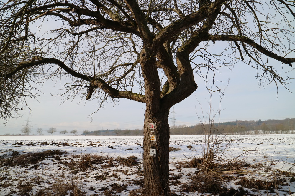 Baum am Weg