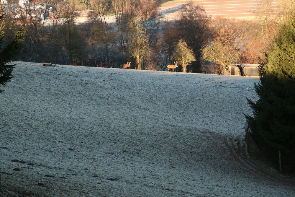 Wildgehege am Landgut Altenhof
