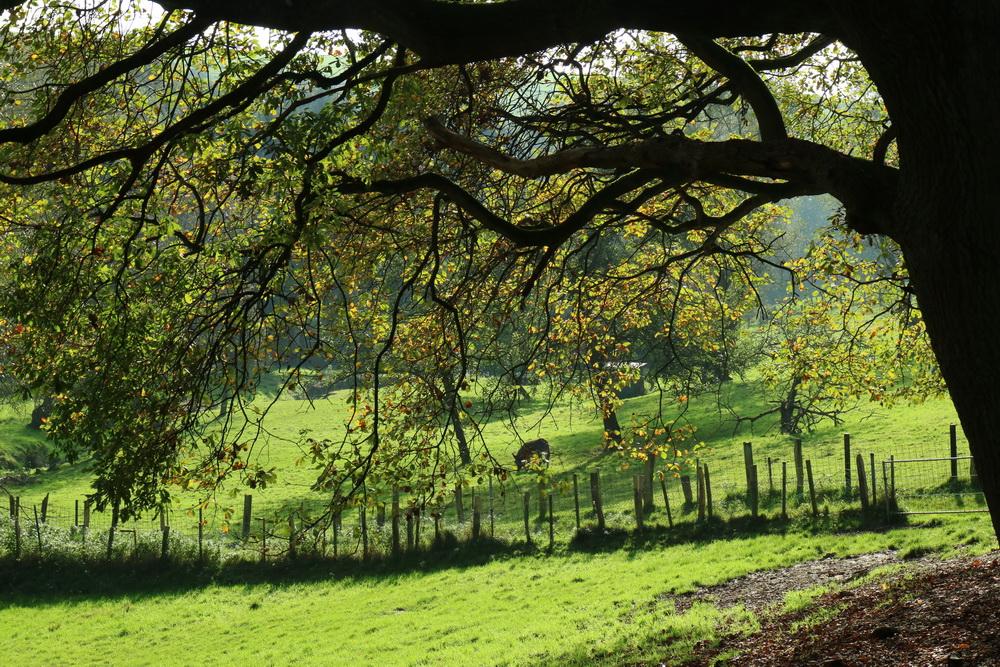 Herbstidylle im Ittertal am Mühlenbusch