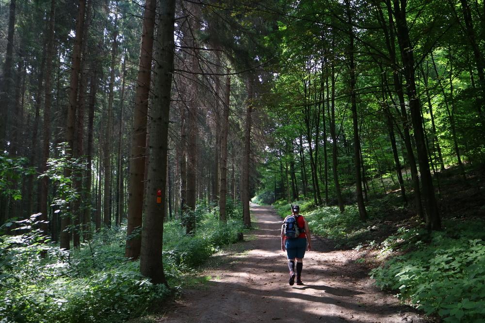 Im Wald bei Neviges