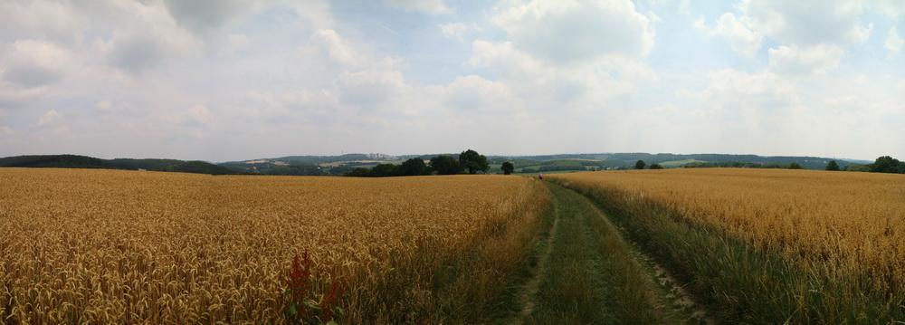 Getreidefeld in Oberdüssel