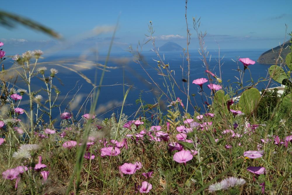 Blumen mit Filicudi und Alicudi