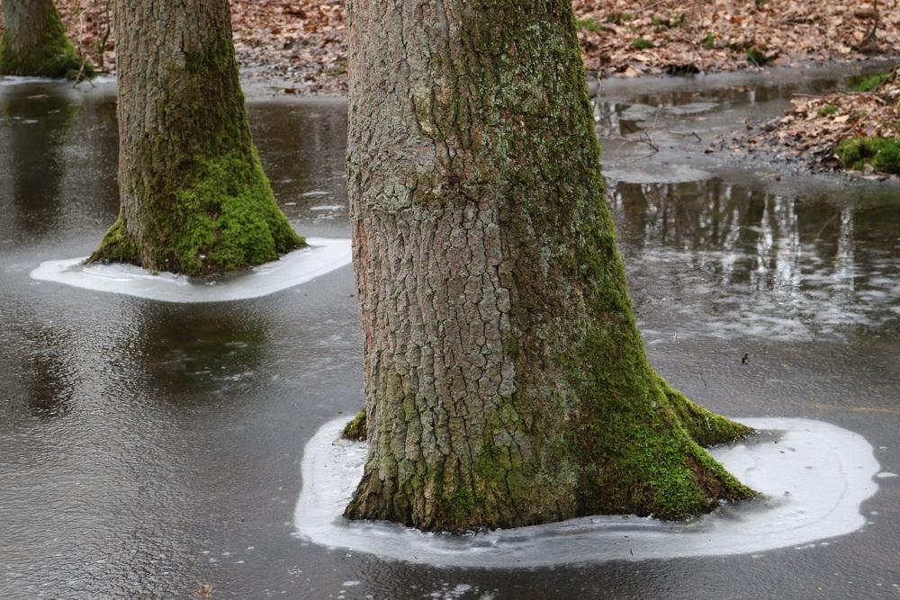 Eisfläche mit Bäumen