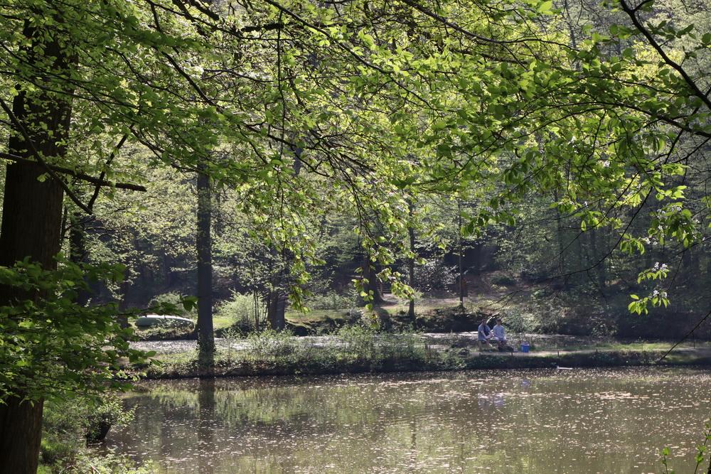 Fischteiche im Pfengstbachtal