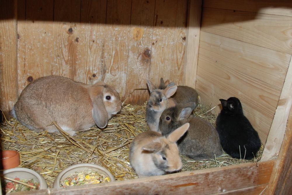 Leni & Socke mit Mutter und Geschwistern im Oktober 2008