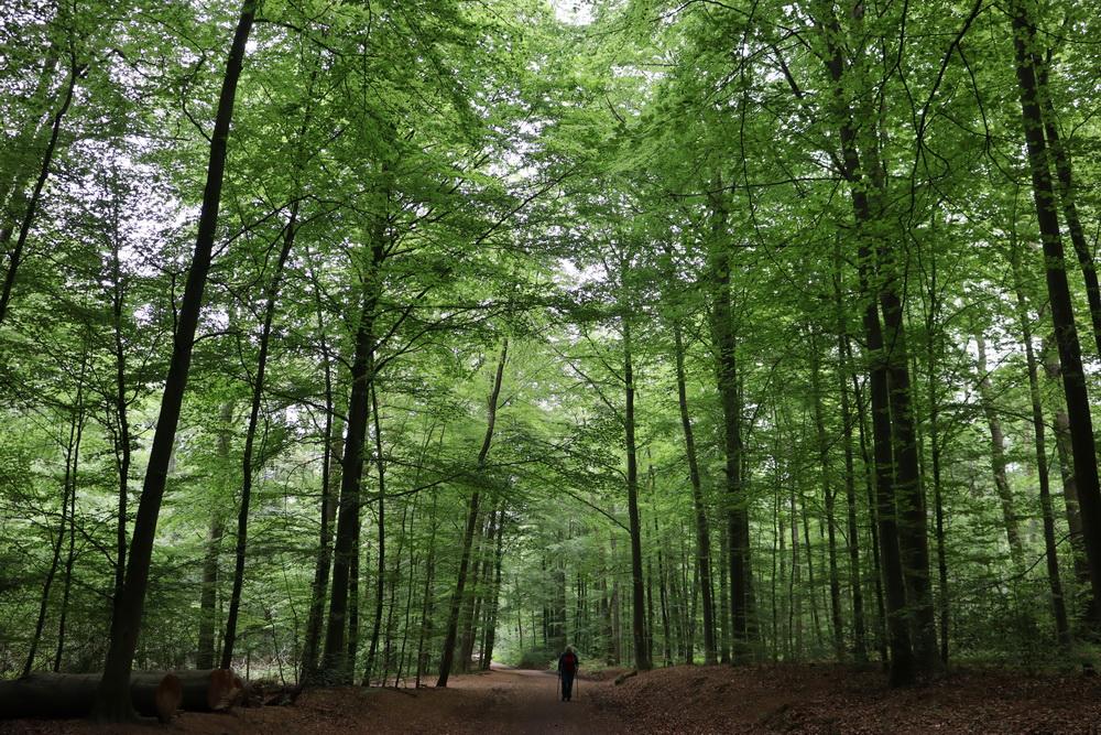 Waldgebiet Hardt