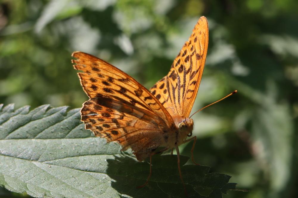 Schmetterling im Streiflicht