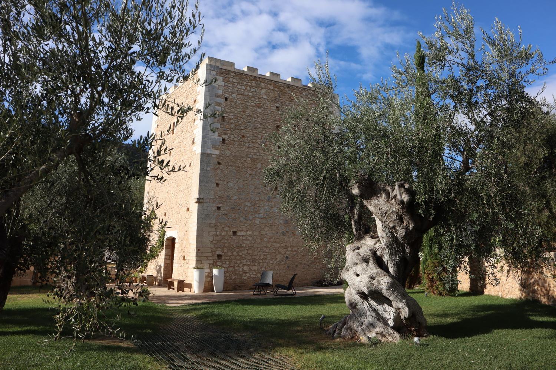 Alter Olivenbaum am Torre Santa Maria
