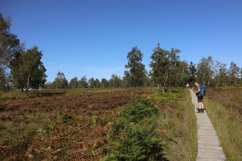 Venn- Landschaft