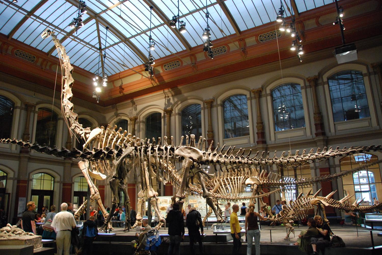 Dinosaurier Halle- Naturkundemuseum Berlin