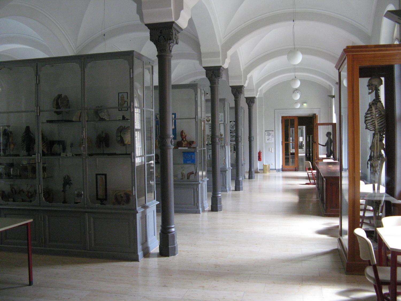 Anatomische Sammlung- Charité