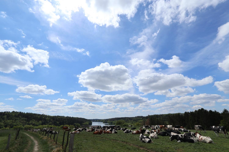 Farmland an der Bever
