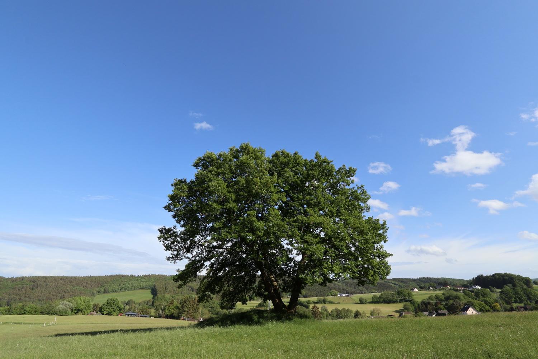 Naturdenkmal Eiche