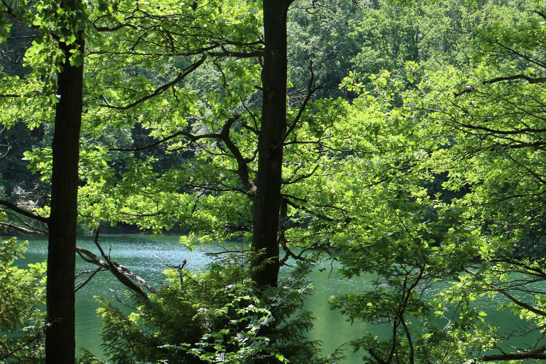 Mischwald an der Neye- Talsperre
