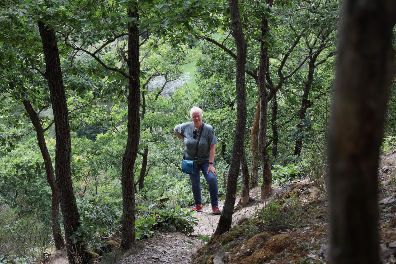 Aufstieg im Eichenwald