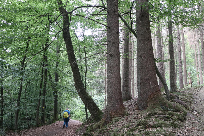 Waldstück bei Wipperfürth