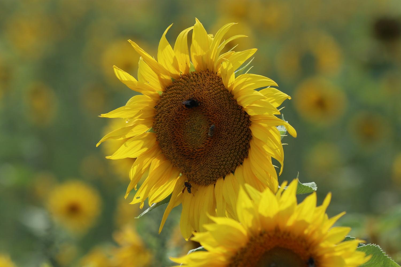 Sommer, Sonne ....