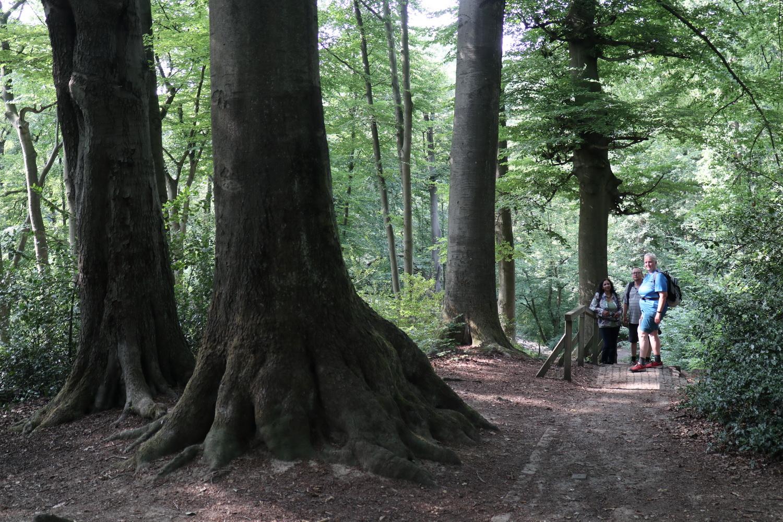 Unterwegs im Mülheimer Urwald