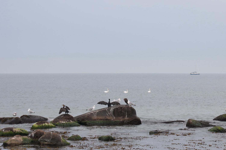 Vogelfelsen am Kap Arkona