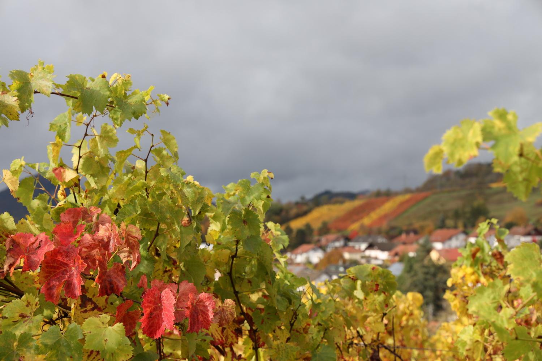 Herbst- Farben