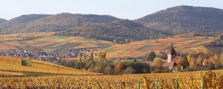Landschaft zwischen Birkweiler und Frankenweiler