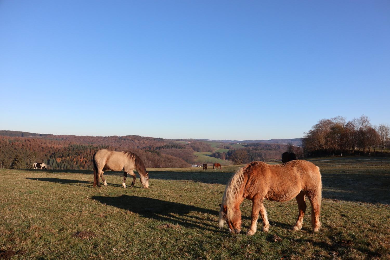 Pferdekoppel in Dannenberg