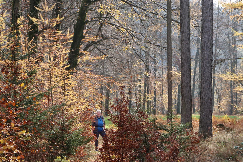 Wald an der Lingese-Talsperre