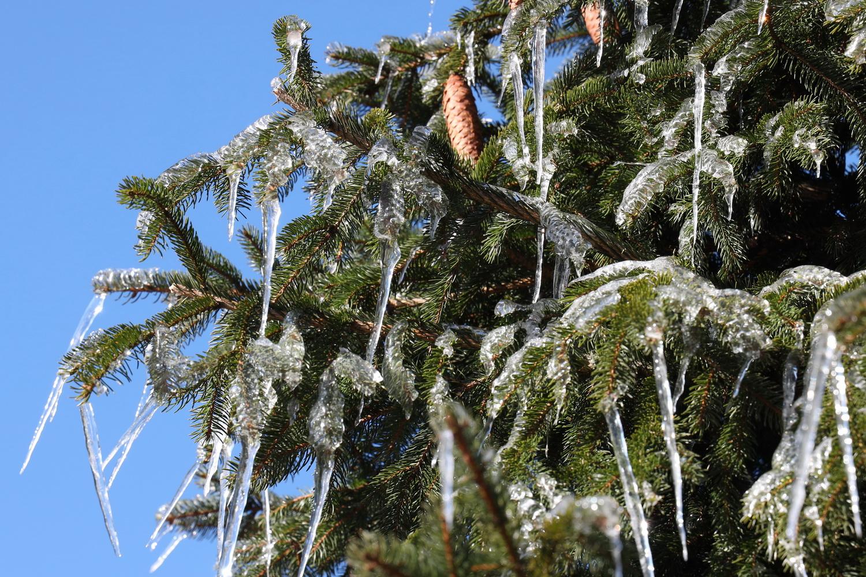 Von der Natur geschmückter Tannenbaum