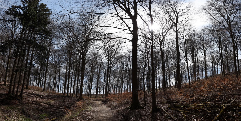 Aufstieg durch Buchenwald am Schafberg