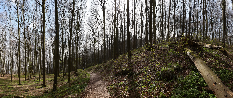 Waldanstieg am Ith-Kammweg