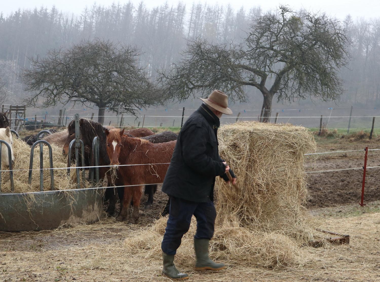 Gutes für die Pferde