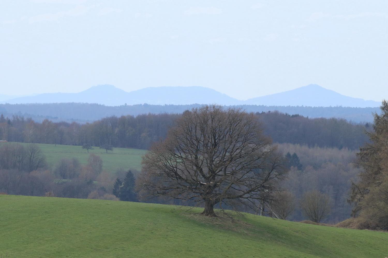 Großer Baum vor Siebengebirge