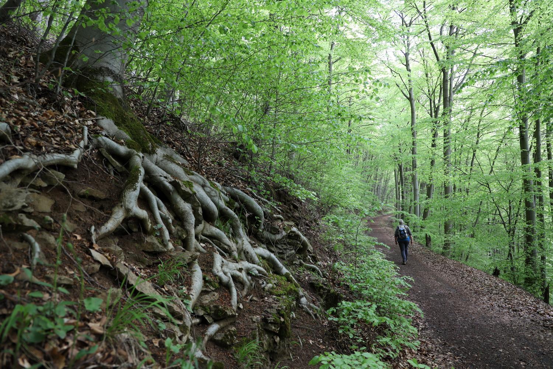 Waldweg an der Baxmannbaude
