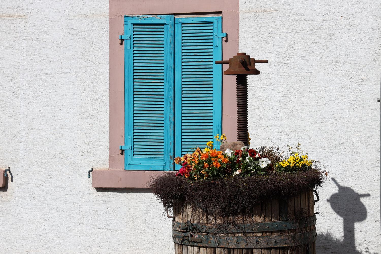 Stilleben in Weingarten