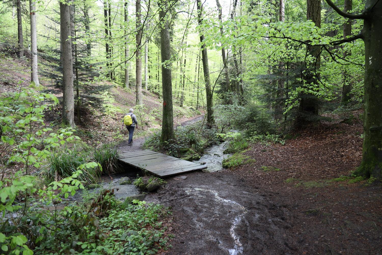 Abstieg durch das Triefenbach-Tal