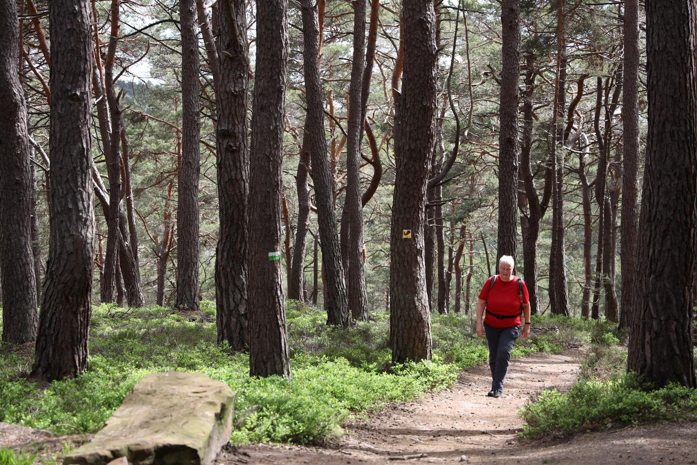 Aufstieg durch Kiefernwald
