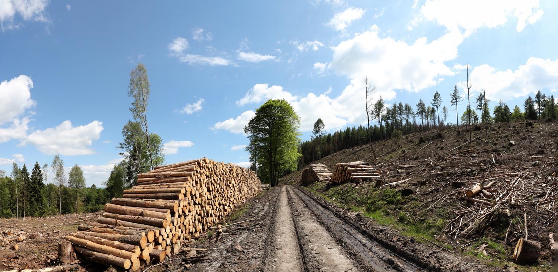 Katastrophengebiete in deutschen Wäldern
